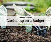 8 Tips for Gardening on a Budget